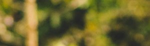 Concord banner 1