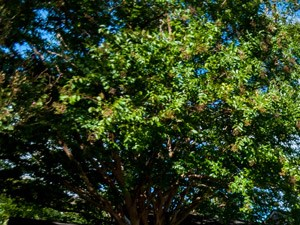 Lexington Park Photo Gallery 21