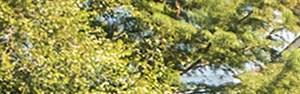 Spring banner 1